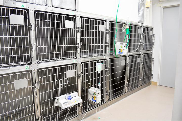 2部屋あり、入院状況によって犬と猫に分けたり、伝染病の隔離に利用したりします。全部で23ゲージあります。